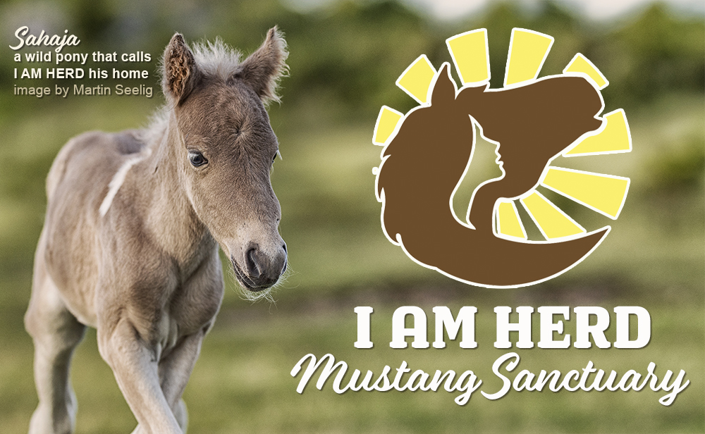 Sahaja wild pony at I AM HERD